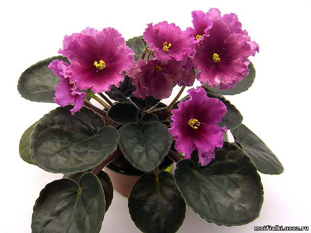 Тз аленький цветочек